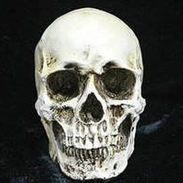 置物 ドクロ 頭蓋骨 模型 インテリア お店