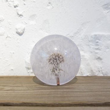 Hafod Grange / ハフォド・グレンジ / Paper weight / Dandelion