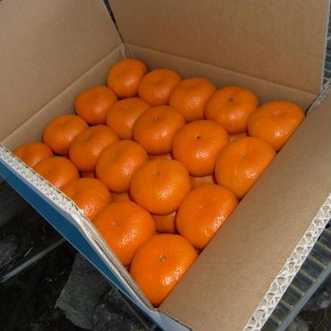 飛田柑橘園のミカン 15K