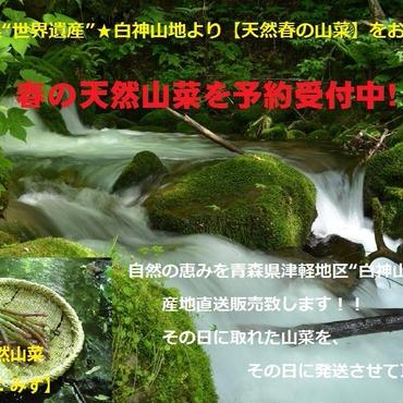 津軽白神山麓【天然山菜】みず/1Kg:2017年度産(期間限定販売)