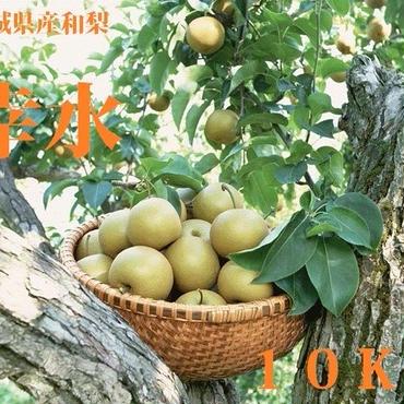 8月:【ギフト】【予約】無化学肥料栽培!宮城県産ブランド和梨(幸水)10kg:贈答品/送料無料