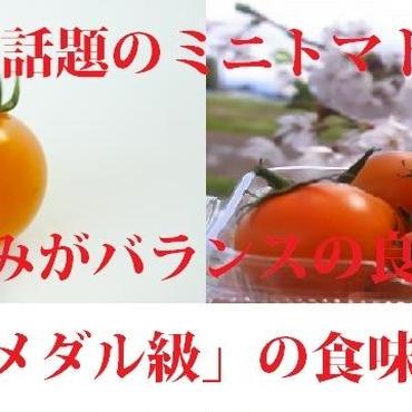 栄養こだわり野菜「にこトマト:ミニトマトMIX(赤/黄)【訳あり】500g/箱」