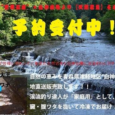 津軽白神山麓【天然イワナ】10尾冷凍セット:先行予約開始(期間限定販売)