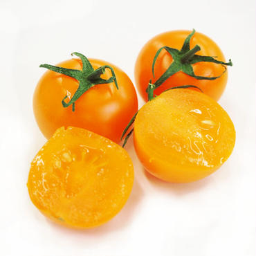 贈答&ギフト用「にこトマト:ミニトマト(黄)150gパック/8個入り」