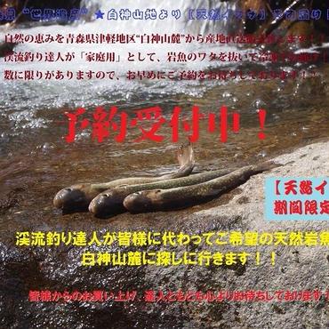 津軽白神山麓【天然イワナ】5尾冷凍セット:(期間限定販売)