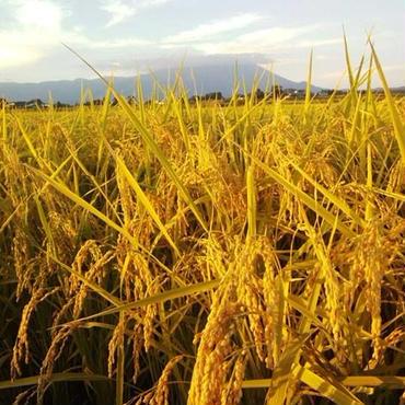 【28年度産新米販売開始】岩手雫石町産特別栽培米「ひとめぼれたんたん米玄米30Kg」業務用