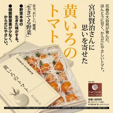 【ギフト】宮沢賢治著 黄いろのトマト(童話)と厳選黄いろのトマト20個入り