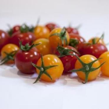栄養こだわり野菜「にこトマト:ミニトマト(赤/黄)150g/パック」MIX/4パック/箱