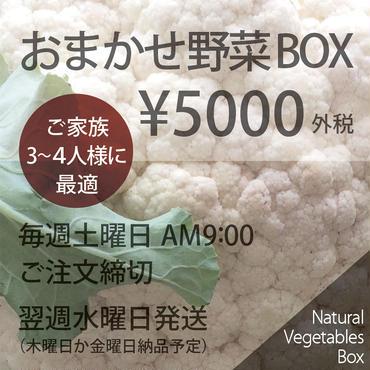 おまかせ野菜BOX - Lサイズ