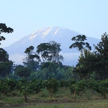 タンザニアAA キボー キリマンジャロ農園 【シティロースト】200g