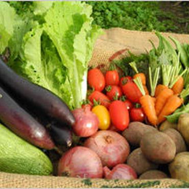 旬の野菜ダンボールぎゅうぎゅう詰め合わせセットLコース