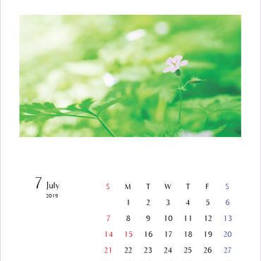 カレンダー2019・A4サイズ/calender2019 A4size
