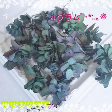 【ꫛꫀꪝ✧‧˚】カシワバアジサイ ブルーパープル (4g/グラデーション加工)