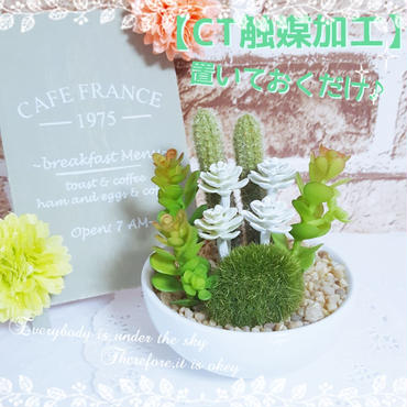 【CT触媒】消臭アーティフィシャルグリーン(フェイクグリーン)