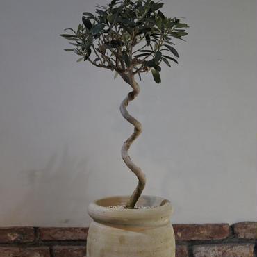 Import Olive テラコッタ壺 no.170422-1