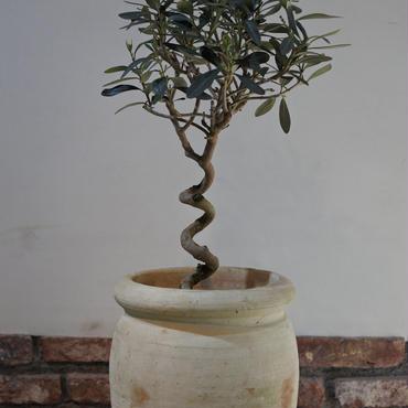 Import Olive テラコッタ壺 no.170422-4
