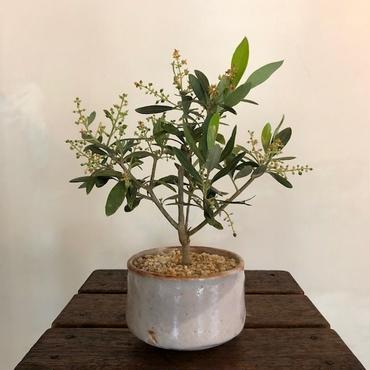 Olive×茶器  志野焼no.2