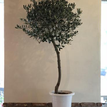 トピアリーLucca 9号鉢 no.180901-1