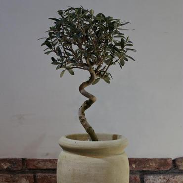 Import Olive テラコッタ壺 no.170422-2