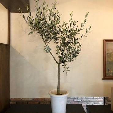 Lucca 9号鉢 no.180417-9