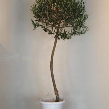 トピアリーLucca 9号鉢 no.180102-9