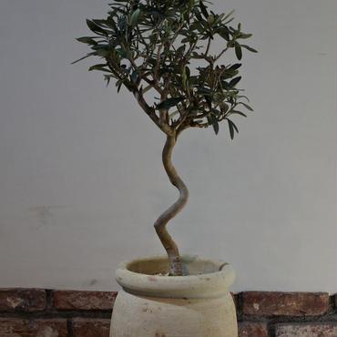 Import Olive テラコッタ壺 no.170422-9