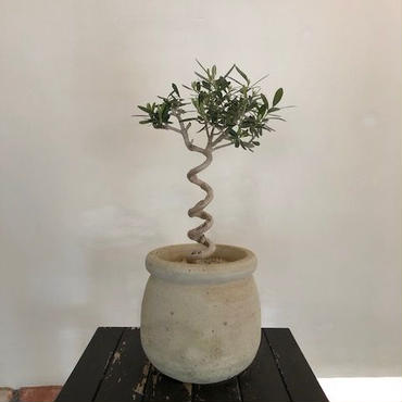 Import Olive テラコッタ壺 no.180408-5