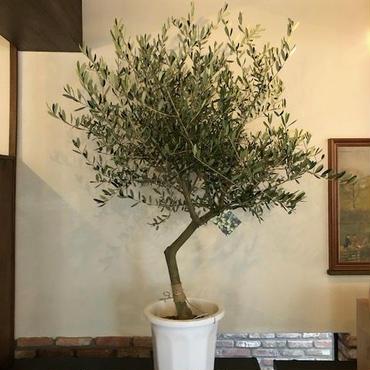 Lucca 10号鉢 no.180417-14