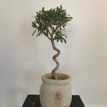 Import Olive テラコッタ壺 no.180408-6