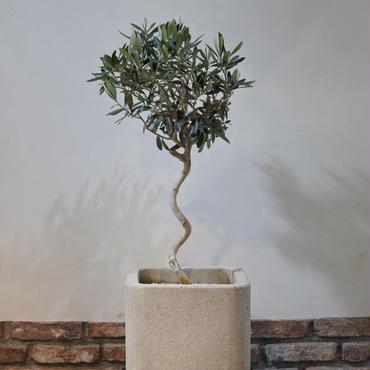 Import Olive×Concrete Pot no.170126-2