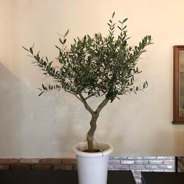 Lucca 9号鉢 no.180417-11
