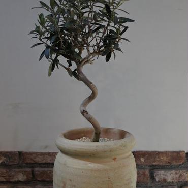 Import Olive テラコッタ壺 no.170422-14