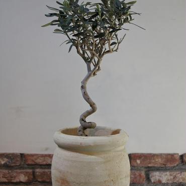 Import Olive テラコッタ壺 no.170422-13