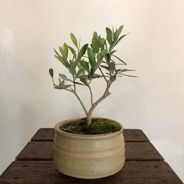 Olive×茶器  志野苔no.1