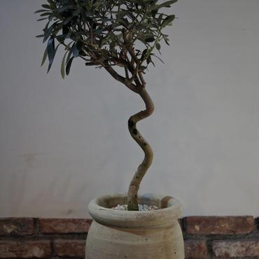 Import Olive テラコッタ壺 no.170422-18