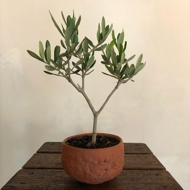 Olive×茶器  常滑no.1