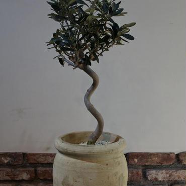 Import Olive テラコッタ壺 no.170422-16
