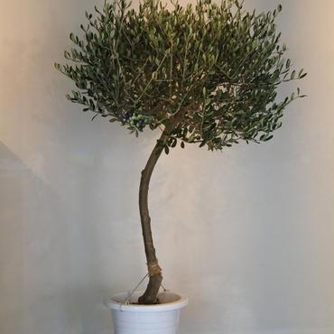 トピアリーLucca 9号鉢 no.180102-10