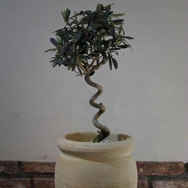 Import Olive テラコッタ壺 no.170422-10