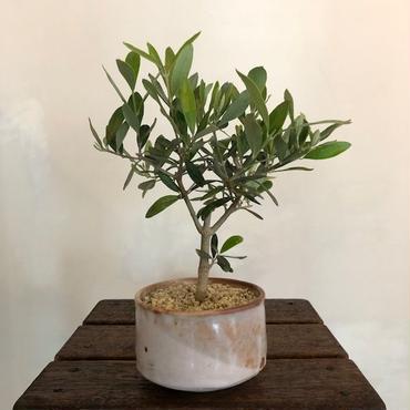 Olive×茶器  志野焼no.3
