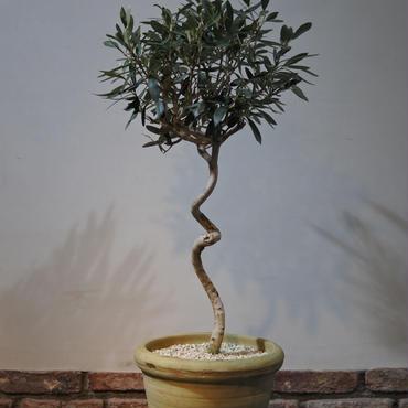 Import Olive チュニジアンテラコッタ no.170215-2