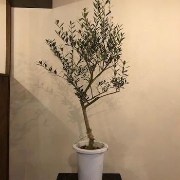 Lucca 7号鉢 no.180417-7