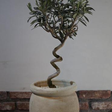 Import Olive テラコッタ壺 no.170422-17