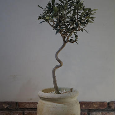 Import Olive テラコッタ壺 no.170422-5