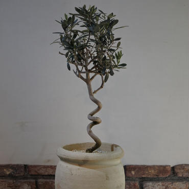 Import Olive テラコッタ壺 no.170422-8