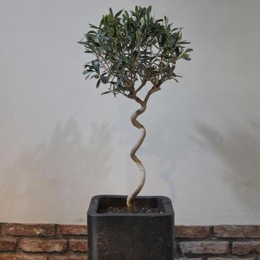 Import Olive×Concrete Pot no.170126-3