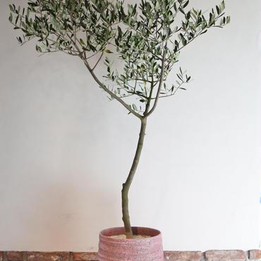 Manzanillo  × RHODOS  no.170613-5