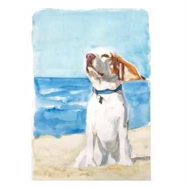 ペットの肖像画 pet portrait/ビーグル
