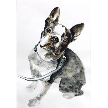 ペットの肖像画 pet portrait/フレンチブルドッグ