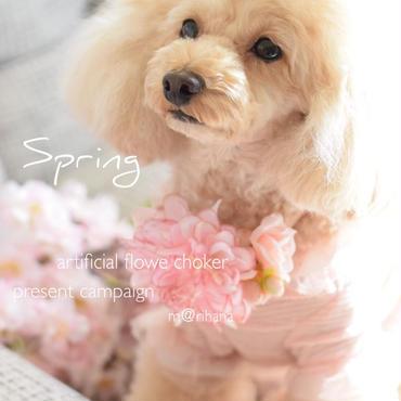 春色(ダリア)チョーカー・ワンちゃん用